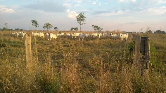 Fazenda A Venda De 58 Alqueirões Em Alvorada - T0 - 1230