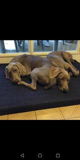 Colchones Par Perros De Espuma O Algodón