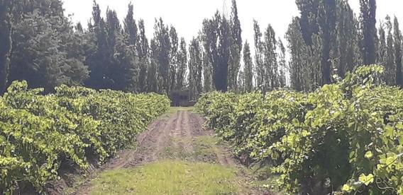 Vendo Finca En Produccion De 20 Hectareas A Tranquera Cerrada En San Rafael Mendoza