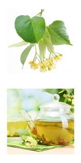Tilia - Árvore - Chá - Bonsai - Sementes Para Mudas