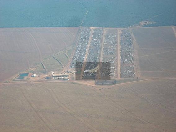 Fazenda Rural À Venda, Centro Norte, Sorriso, Mt. - Fa0008