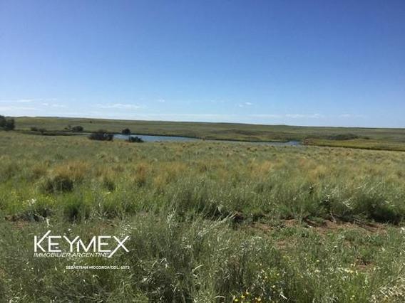 Campo - Estancia -chacharramendi - La Pampa - Estudio Del Agua - Ganadero