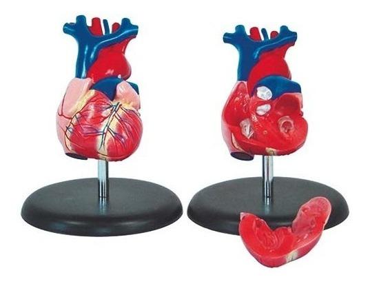 Coração Tamanho Natural Modelo Anatômico Com 2 Partes