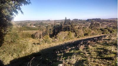 Campo Con Hermosa Vista