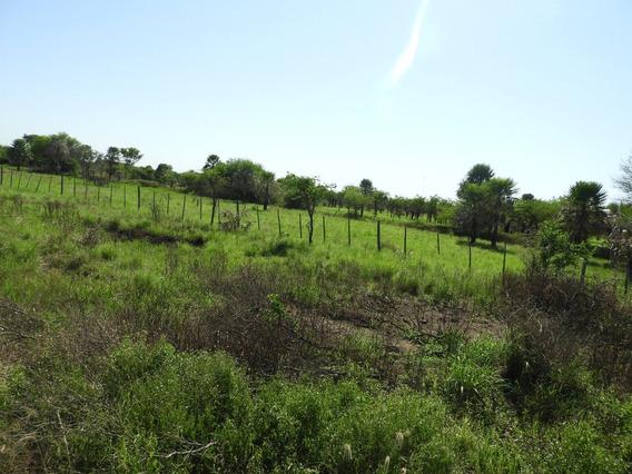 Campo Ganadero Con 3.227 Hectáreas ( Misión Laishi. Fza )
