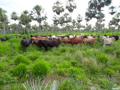Fazenda A Venda Em Porto Murtinho - Ms (pecuária) - 1032