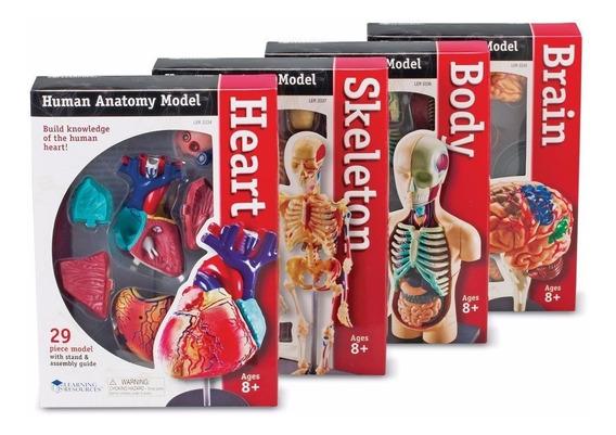 Modelo Anatómico Set4 Corazón Cerebro Esqueleto Envio+ Meses