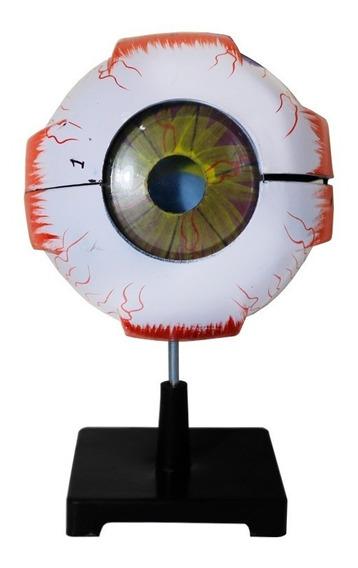 Olho Anatomico 3d