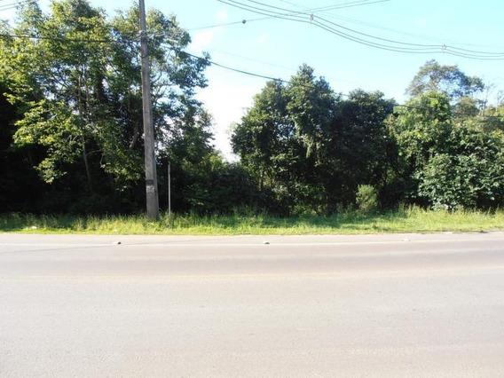Terreno Para Venda Em Quatro Barras, Jardim Orestes Thá - Te-013