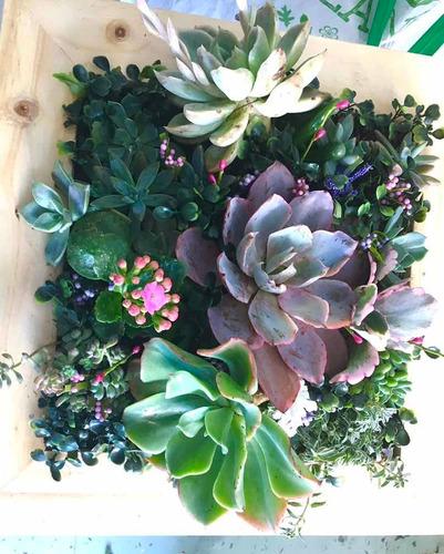 Cuadros En Vivo De Succulents Light Garden