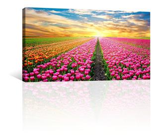 Cuadro Decorativo Flores Canvas Campo De Tulipanes Rosados