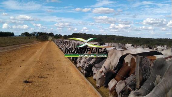 Fazenda À Venda Em Alto Araguaia Mt Agricultura, Pecuária, Reflorestamento - 364