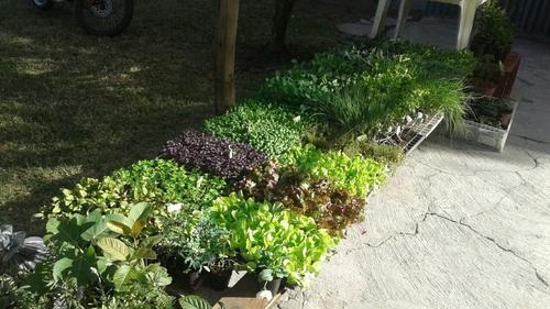 Imagen 1 de 6 de Plantines Para Huerta Por Docena
