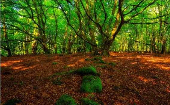 Fundo Fotográfico Tecido Sublimado 3d Bela Floresta 3,0x2,0m