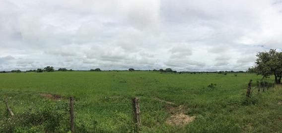 Finca Cerca De Rio Tiznado A 50 Km De Calabozo