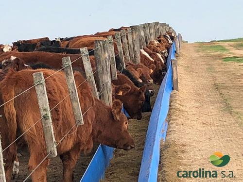 Imagen 1 de 6 de Comederos Para Ganado - Carolina .s.a