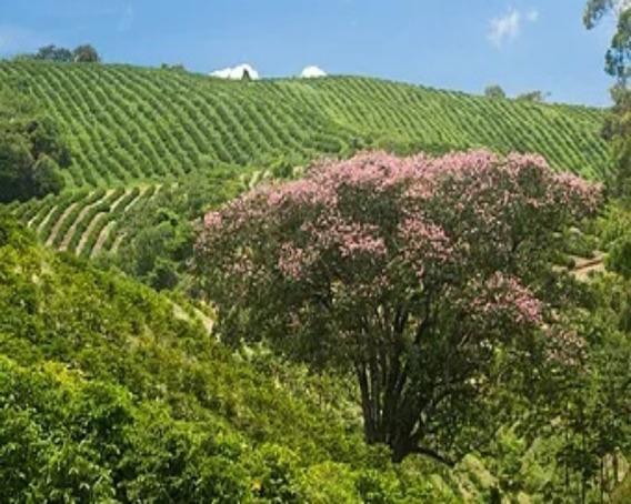 Fazenda Sul De Minas Gerais - Fa00014 - 32180427