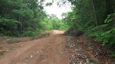Fazenda A Venda Em Araguacema - To, ( Agricultura ) - 516