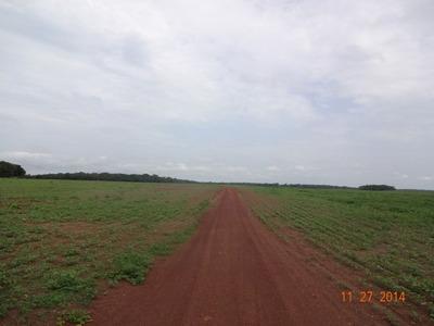 Fazenda Em Marianópolis - To, Dupla Aptidão - 16