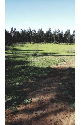 Sector La Maravilla, Región Del Biobío