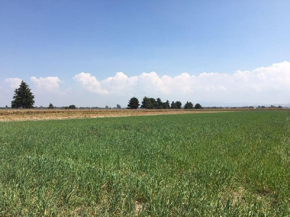 Terreno En Venta Tenango Del Valle.
