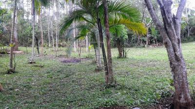 Sitio - Alto Do Aririu - Ref: 29019 - V-29017