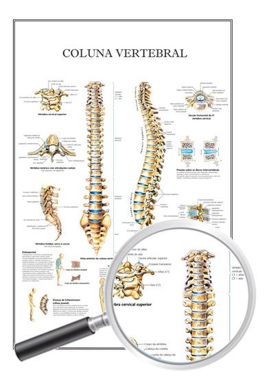 Mapa Anatomia Humana P/ Clínica, Coluna Vertebral 40x60 Cm