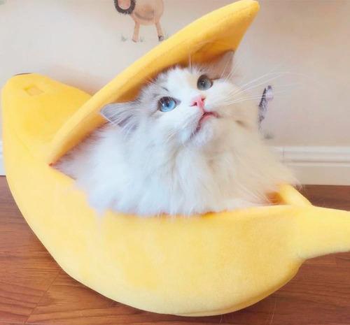 Cama Para Pet Banana Gato E Cachorro Banana Caminha Casa Almofada Portátil  - Pronta Entrega | Mercado Livre