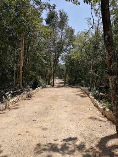 Terreno En Venta Tulum Xcacel Vive Rodeado De La Naturaleza