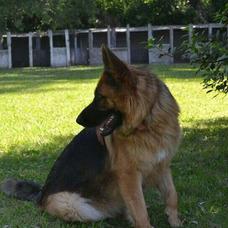 Guarderia Canina Hocicos/pensionado Canino Hocicos