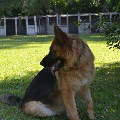 Guarderia Y Pensionado Canino Segundacucha
