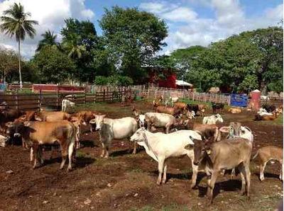 Rancho Ganadero En Venta 73 Hectareas Los Ramones Nuevo Leon