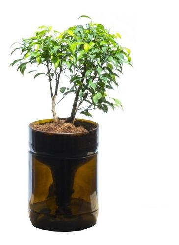 Imagen 1 de 7 de Ficus Benjamina Little Plant 22, Maceta Autorregante
