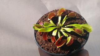 Plantas Carnívoras Con Garantía.