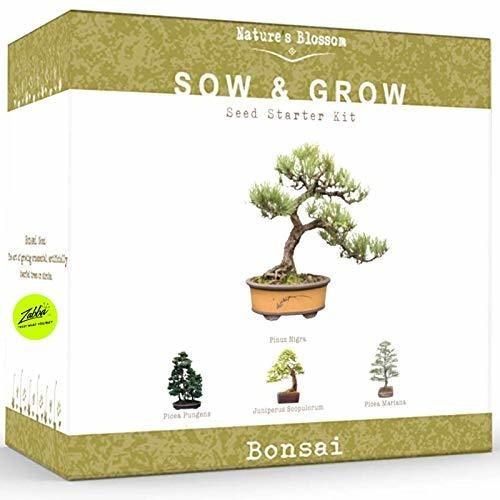 Nature's Blossom Bonsai Tree Kit - Grow 4 Types Of Bonsai T