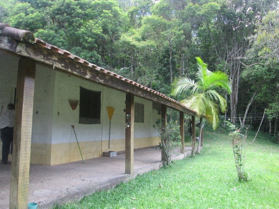 Linda Chacara Com Bosque De Palmitos E Casa