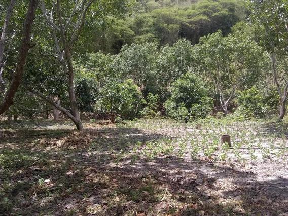 Granja Terreno En Venta En Duaca Lara #20-3358
