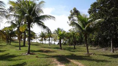 Sítio Em Coqueiros De Arembepe, Área 60.000m², 800 Coqueiros