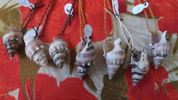 Kit 14 Colares De Conchas Do Mar Acessório Sereia Natural