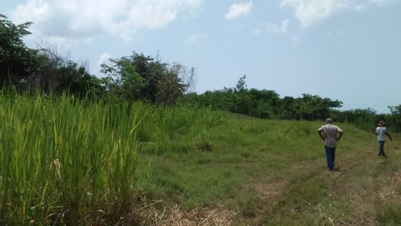 Por Carretera Jubey, Boca Chica, Terreno De 95,350 Mts2