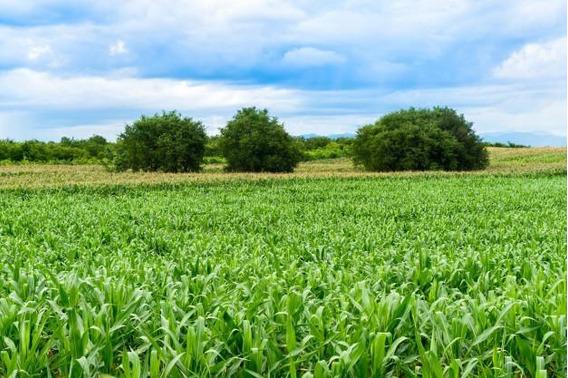 Campo Agricola 72 Has En Venta En Impira Córdoba
