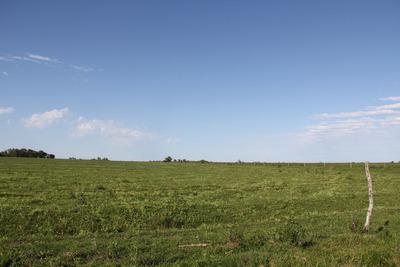Campo,hectáreas,agrícola,alambrado,san Salvador,entre Ríos