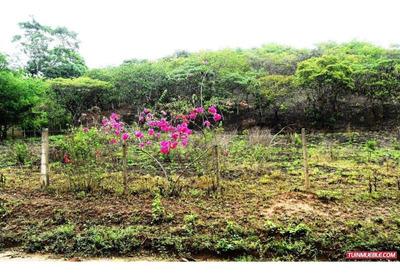 Terreno En Venta Mcpio Libertador Carabobo 19-8406rp