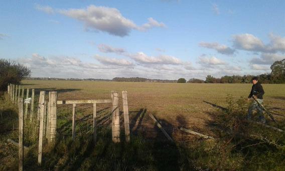 Importante Campo Agricola Ganadero