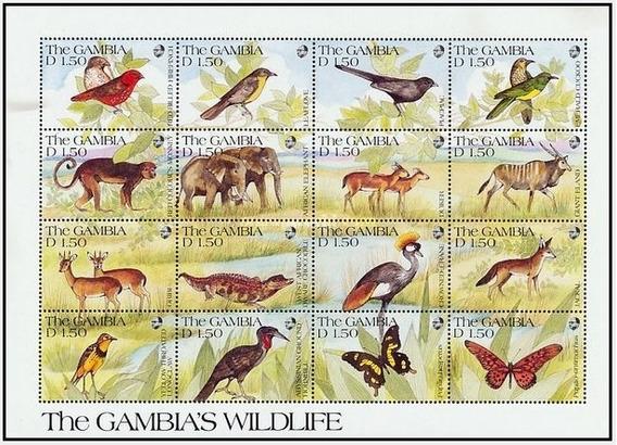 Dams Gâmbia Fauna Africana Animais Savana Selvagens 2