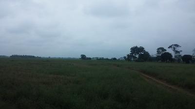 32 Cuadras De Terreno Agricola