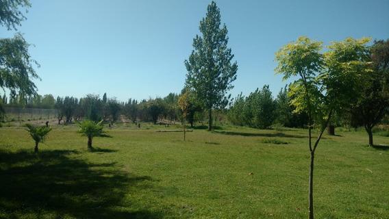 #vendo Finca En San Rafael Mendoza