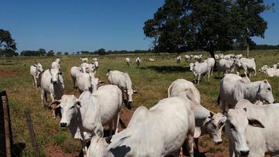 Vendo Fazenda Em Campo Grande-ms Parcelado( Cod: 6007 )