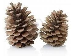 Pinha Seca Decoração De Natal 35 Unidades Selecionadas