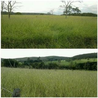 Fazenda Com 5 Quartos Para Comprar No Centro Em Bocaiúva/mg - 16667